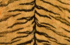 Skin's texture of tiger. Close-up surface fur of tiger (Panthera tigris royalty free stock photography