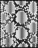 Skin of snake Royalty Free Stock Photos