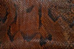skin snake pattern Royalty Free Stock Photo