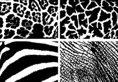 Skin texture. Black and white texture of the skin of wild animals Royalty Free Stock Photography