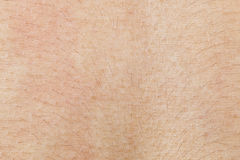 Skin texture with hair for pattern Royalty Free Stock Image