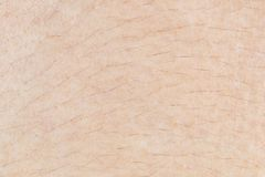 Skin texture with hair for pattern Royalty Free Stock Images