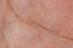 Skin texture for pattern Royalty Free Stock Image