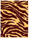 Skin of the tiger. Striped skin of the tiger Stock Image