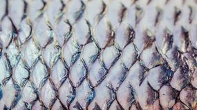 Skin of tilapia fish after the scales removed. Natural abstract pattern background stock image