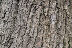 Skin of tree Royalty Free Stock Photography