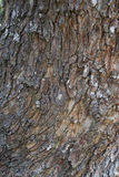 Skin Tree Texture background Royalty Free Stock Images