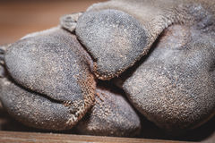 Dog soles. Skin under the dog soles royalty free stock photo