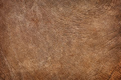 Skin of young elephant - natural background Stock Photo