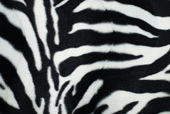 Skin of a zebra Stock Images