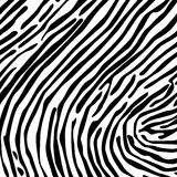 Skin of a zebra. Structure from a skin of a zebra. A vector illustration Royalty Free Stock Photos