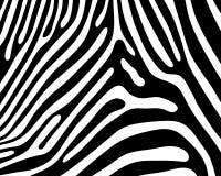 Skin of zebra Royalty Free Stock Photo