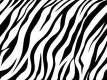 Skin zebra. Vector abstract skin zebra texture Stock Photos