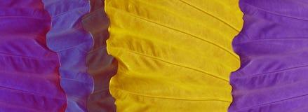 Skinali Foglie tropicali porpora, lilla, gialle e blu Concetto di Eco Cenni storici della giungla Grandi foglie variopinte bandie fotografia stock libera da diritti