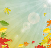 Skinande Autumn Natural Leaves Background vektor Royaltyfri Foto