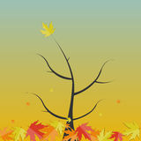 Skinande Autumn Natural Tree Background vektor Arkivfoto