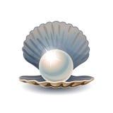 Skinande pärla i öppnat snäckskal vektor illustrationer