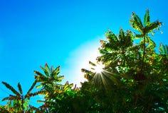 skinande solljustrees Royaltyfri Bild