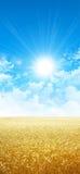 Skinande som vete i solen Arkivbilder