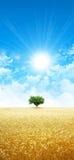Skinande som vete i solen Arkivfoto