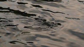 Skinande vattenyttersida med stenar på botten Vattenyttersida med krusningar Yttersida för flodvatten långsam rörelse arkivfilmer