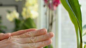 Skincare通过摩擦润滑剂润肤霜奶油到损坏的胳膊皮肤和手指里 影视素材