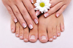 Skincare of a beauty female feet. With camomile's flower Royalty Free Stock Photography