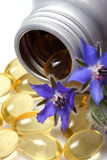Skincare, borage moisturizing oil. Royalty Free Stock Image