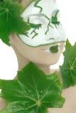 Skincare de los cosméticos de la planta verde imagen de archivo