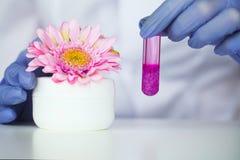 Skincare för vetenskaper för skönhetskönhetsmedel för formulera och blandnings, med växt- extrakt, forskare för att förbereda org fotografering för bildbyråer