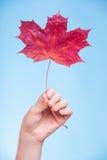 Skincare. Mão com a folha de bordo como a pele capilar seca vermelha do símbolo. imagem de stock royalty free