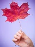 Skincare Mão com a folha de bordo como a pele capilar seca vermelha do símbolo imagem de stock