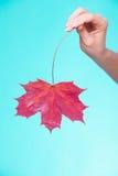 Skincare Ręka z liściem klonowym jako symbol czerwieni sucha kapilarna skóra Fotografia Stock