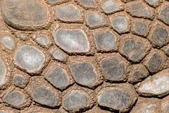 Sking Aldabra gigantyczny tortoise Zdjęcie Royalty Free