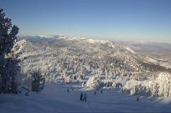 Sking into Nevada. Skiers  among snow-encumbered pines ski into Nevada desert at Lake Tahoe Stock Photo