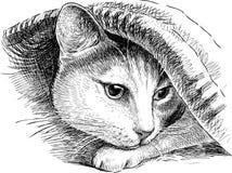 Skinn för en huskatt under en filt vektor illustrationer