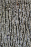 Skinned palm tree trunk - background Stock Images