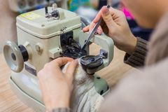 Skinner using sewing machine for stitching fur skin at atelier royalty free stock photo