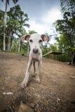 Skinny dog Stock Images