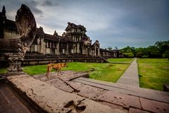 Skinny dog stands on the steps of Angkor Wat Royalty Free Stock Image