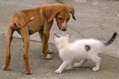 Skinny Dog and White Cat. Friendship. Skinny dog and little white cat Royalty Free Stock Photography