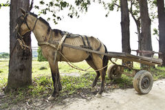 Skinny horse. Carrying a cart tied up to a tree Stock Photography