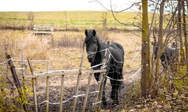 Skinny Horse outside in fenced yard area Stock Image