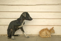 Skinny kitten and puppy  in the Valle de Vi�ales, in central Cuba Royalty Free Stock Photos