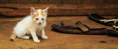 Skinny poor kitten sitting on the ground Royalty Free Stock Images