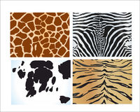 Skins of different animals on a white background. The skins of various wild animals on a white background Stock Image