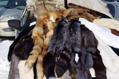 Skins of fur-bearing animals are sold at the fair. stock image
