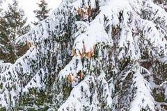 Skiortschnee schießt Betrieb im Schnee und Bäume inii Winter h Lizenzfreie Stockbilder