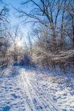 Skipiste auf sonnigem Winterwald Stockbilder