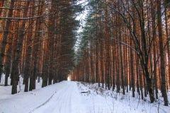Skipiste in einem Kiefernwald lizenzfreie stockbilder